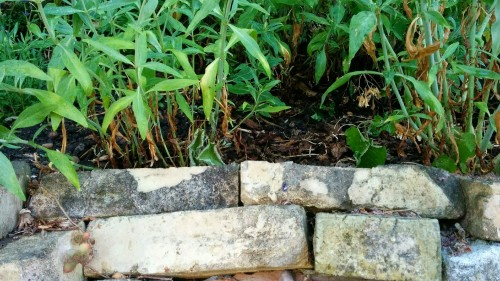 Im Gartenbau dienen Trockenmauern meist zur Hangbefestigung. Foto: Pixabay