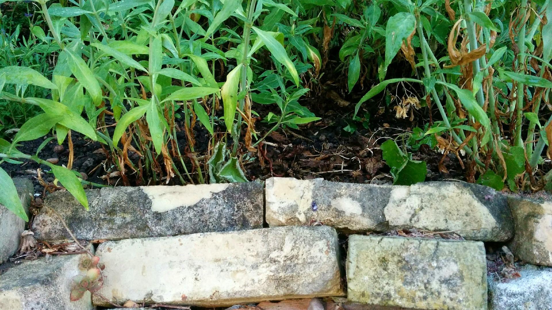 trockenmauern: aufbau und einsatzbereiche › garten- und