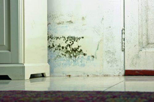 Die Platten kommen häufig bei der Schimmelpilzsanierung zum Einsatz und verhindern einen erneuten Befall. Foto: Knauf Aquapanel