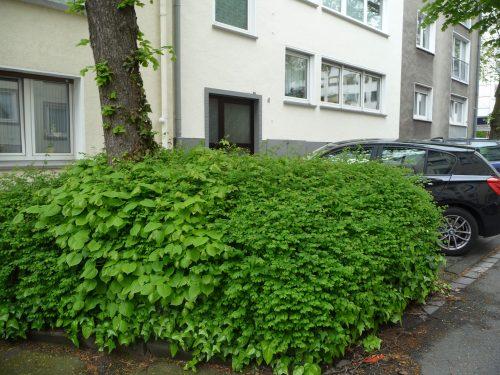 Es geht auch anders: Natürlicher Baumschutz im Parkplatzbereich. Foto: Grimm
