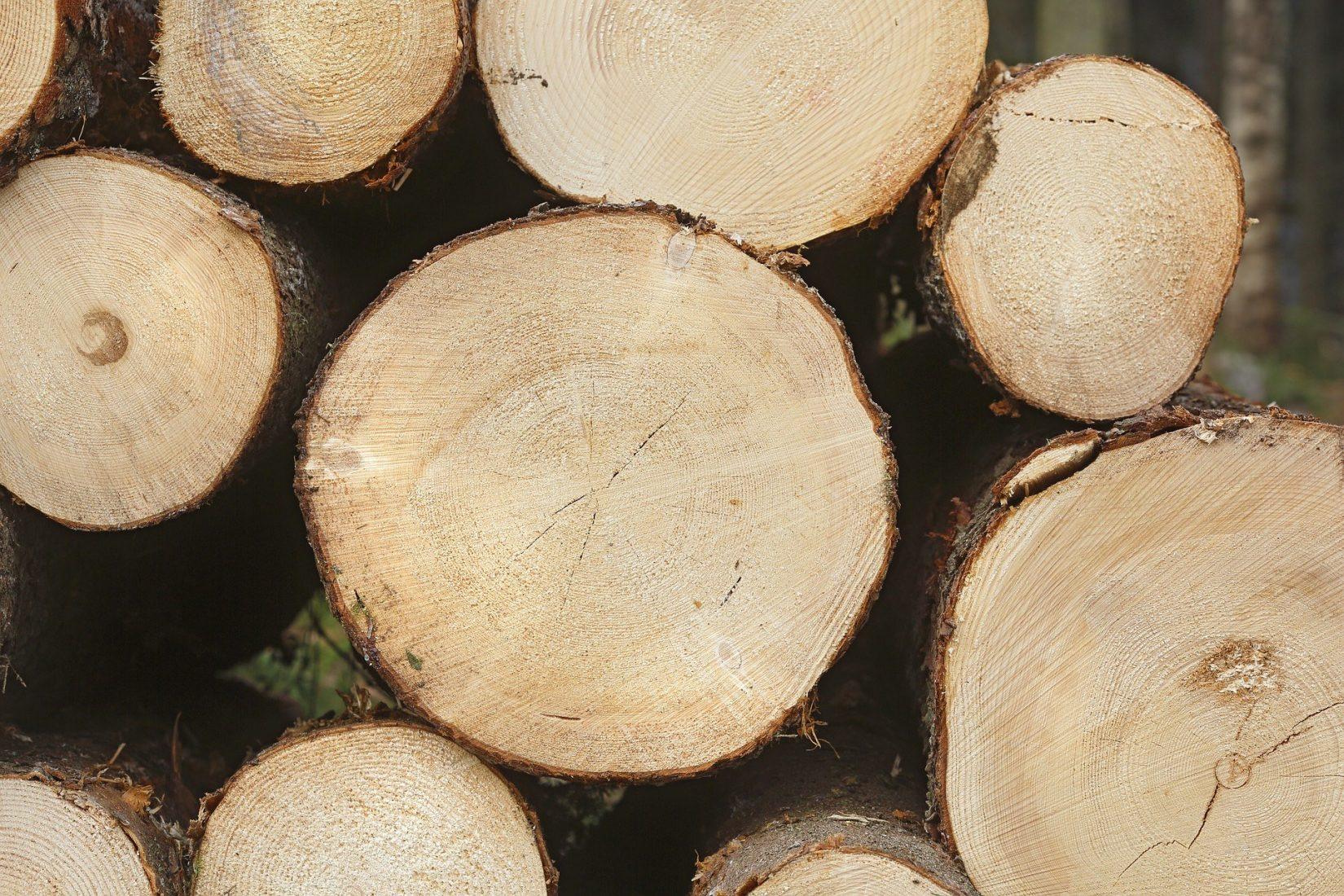 Fichtenholz kommt für Bauprodukte besonders häufig zum Einsatz. Foto: Pixabay