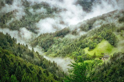 Große Teile des deutschen Waldes bestehen aus Nadelbäumen. Foto: Pixabay