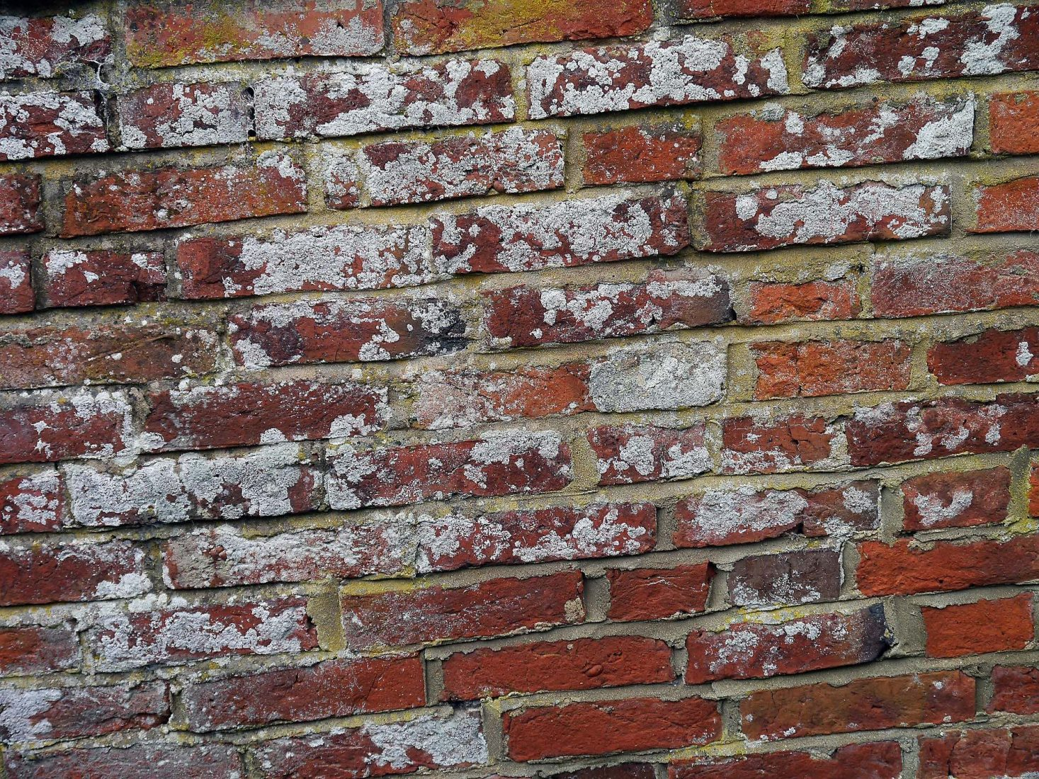 Hässliche Ausblühungen an einer Wand aus Ziegelsteinen. Foto: Pixabay