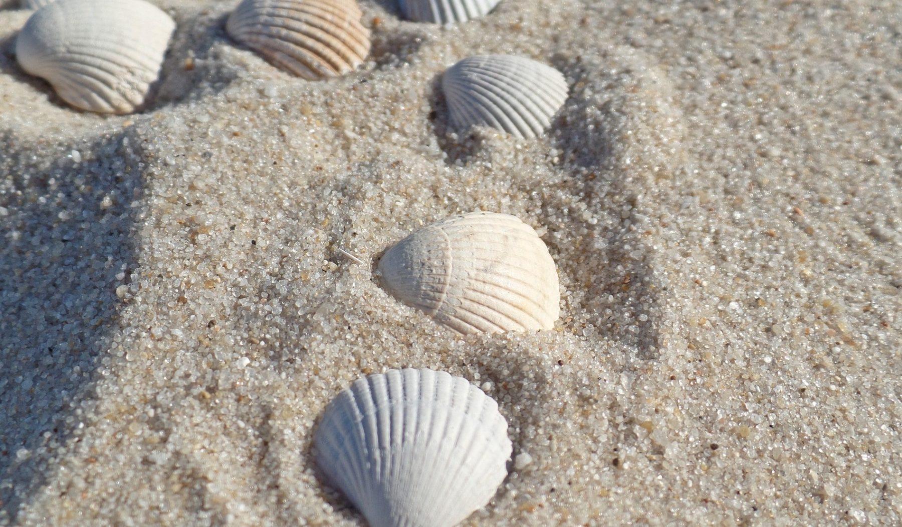 Muschelkalkmörtel besteht hauptsächlich aus Seemuscheln und Sand. Foto: Pixabay