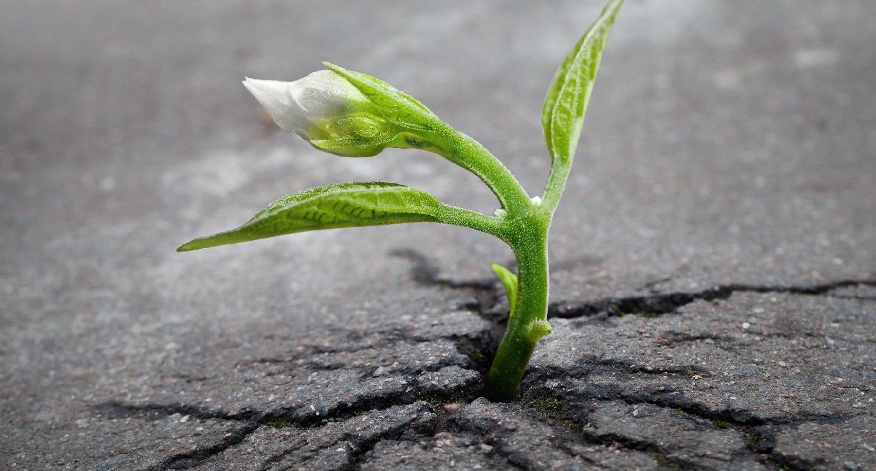 Alter Ausbauasphalt wird heute zu etwa 84 % wiederverwendet. Foto: Pixabay