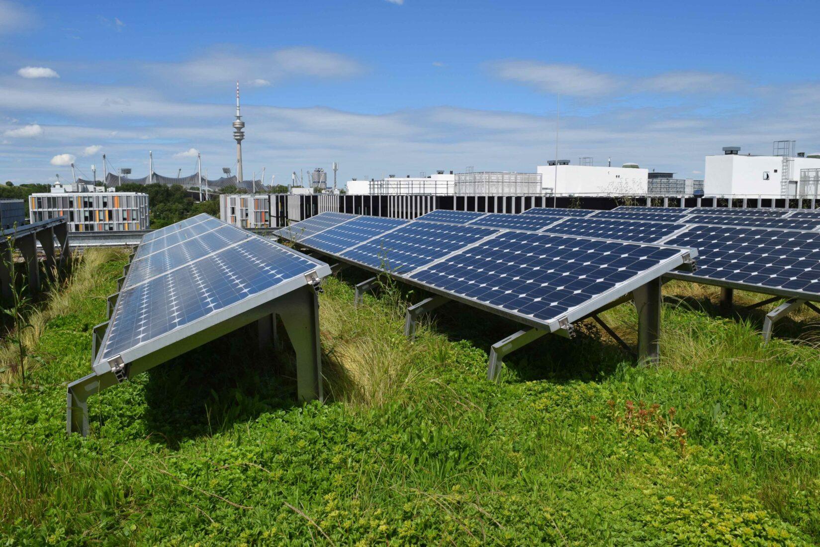 Mustergültiges Solar-Gründach mit ausreichenden Abständen. Foto: BuGG / G. Mann