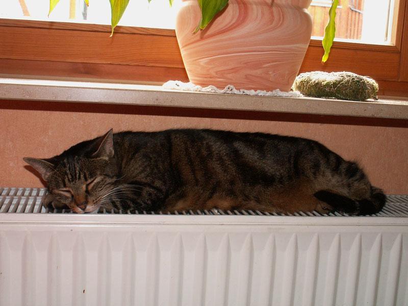 konventionelle heizungen erwrmen die luft vor allem durch wrmekonvektion diese katze nutzt allerdings das prinzip der direkten wrmeleitung - Warmeleitung Beispiele