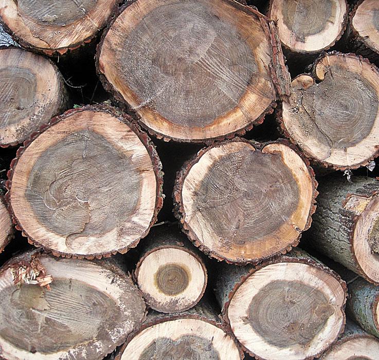 Unterschied Kernholz und Splintholz